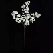 Ветка сакуры 105см фото
