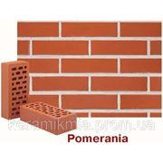 Pomerania фото
