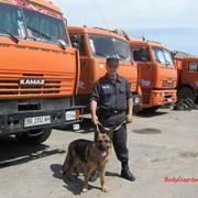 Охрана и сопрровождение грузов с использованием служебных собак фото