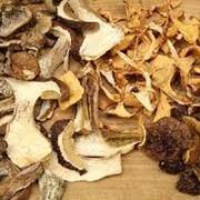 Сушеные грибы белые оптом фото