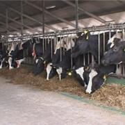 Кормовая добавка PANTO MINERAL R-65 (Панто Минерал) для сухостойных коров фото