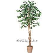 Искусственное дерево (Фикус) фото