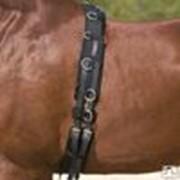 Подпруга, снаряжение для лошадей фото