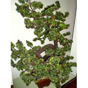 Дерево искусственное Бонсай фото
