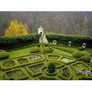 Регулярный сад фото