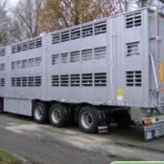 Перевозка домашних животных фото
