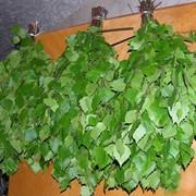 Веники березовые для бани и сауны фото