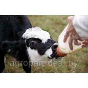 Заменитель молока ПОЛМАС 12%, 15%, 16%, 18% фото