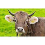 ПРЕМИКС П60-2 для коров, быков-производителей в пастбищный период фото