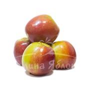 Яблоки Лигол фото
