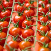 Турецкие помидоры и перец фото