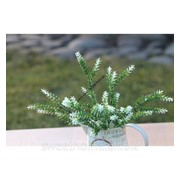 Травка зелено- белая фото