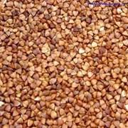 Переработка гречихи на давальческих условиях.Переработка зерновых на крупу фото