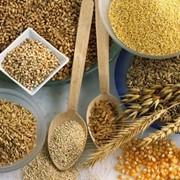Крупы экструдированные - манная, гречневая, овсяная, рисовая, пшеничная, кукурузная, ячменная, гороховая, ржаная, соевая фото
