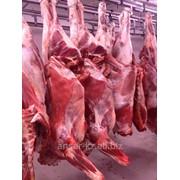 Мясо свежемороженное в Казахстане фото