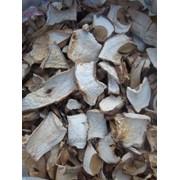 Сухі гриби із Закарпаття фото