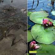 Экологический мониторинг (мониторинг окружающей среды) фото