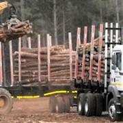 Перевозка леса лесовозами фото