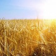 Нанотехнологии в земледелии фото