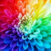 Краски фото