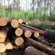 Рубка деревьев фото