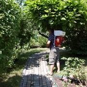 Профилактическая обработка растений от болезней и вредителей фото