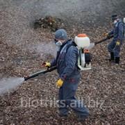 Профессиональное уничтожение тараканов по Люберцам фото