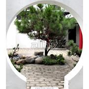Озеленение садов и приусадебных участков фото