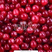 Красная смородина замороженная от производителя и много других замороженных фруктов и овощей. Купить красную смородину фото