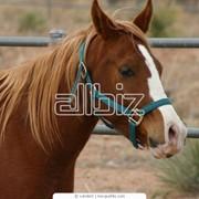 Лошади для троеборья фото