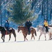Конные прогулки зимой и летом фото