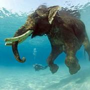 Дайвинг на Андаманских, Лакшадвипских и Никобарских островах фото