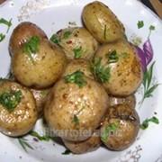 Картофель продовольственный, товарный, семенной, фуражный, нестандартный, минибульбы и растения «in vitro» фото