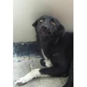 Поиск новых владельцев для бездомных животных фото