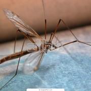 Борьба с комарами в помещениях фото