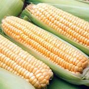 Замороженная кукуруза в астане фото