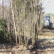 Уничтожение нежелательной древесно-кустарниковой растительности фото