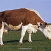 Мел для комбикормов (кормовой) фото