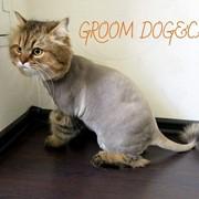 Стрижка котов. фото