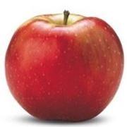 Яблоки Флорина фото