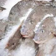 Рыба замороженная фото