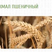КРАХМАЛ ПШЕНИЧНЫЙ фото