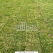Искусственный газон, трава фото
