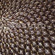 Семена подсолнечника РЕЙНА (MAY AGRO SEED) фото