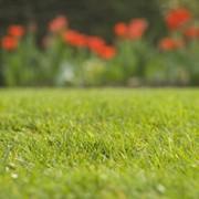 Устройство газонов фото
