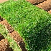 Укладка рулонных газонов в Молдове фото