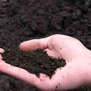 Чернозем, торф, торфосмеси, почвогрунт с доставкой фото