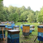 Лесной мёд фото