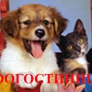 Услуги гостиниц для животных фото