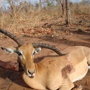 Сафари в Намибии фото